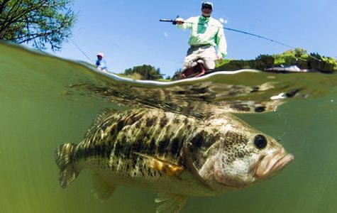 Top 5 Lake in Southern Illinois for Bass Fishing